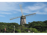 The Dutch Windmill, as seen from the beach, with its amazing thick strand of Monterey Cypress trees surrounding.