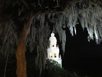 Spanish moss and lit tower.