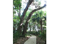 Beautiful path to the observation tower.