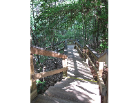 Boardwalk stairs and vegetation.