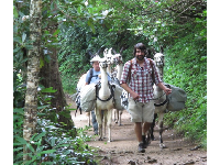 Leading alpacas down the trail after bringing supplies to LeConte Lodge.