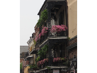 Balcony spilling over with flowers, in the French Quarter.