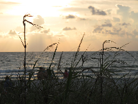 Sea oats and sunset.