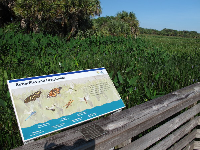 Plaque on the boardwalk explaining about butterflies.