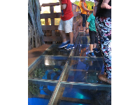 Kids look down at the clear blue glass to see the animals below.