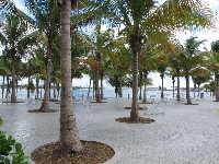 Museum Park is gorgeous with its palm trees by the bay.