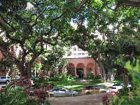 Beautiful trees on the grounds of the Royal Hawaiian Hotel.