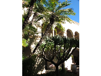 Desert plant and palms in the inner courtyard of the House of Hospitality.