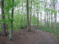 The forest behind Avonturenland.