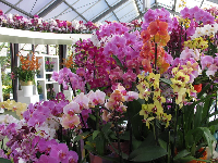 Orchids in a pavilion.