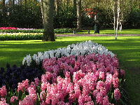 Pink, white, and purple hyacinths.