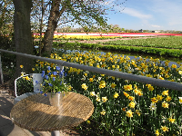 A table overlooking the tulip fields.
