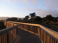The wooden boardwalk over the dunes.