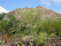 The green desert vegetation.
