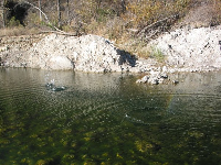 Skimming rocks on the surface of Santa Ynez River during the winter, when it was a bit mossy-looking.