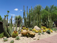A large variety of cactus plants at the main strip.