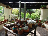 Shaded area with pots of small cacti.