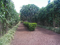 The entrance to the maze.