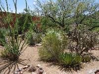 The beautiful cactus garden out front.