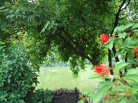 Red flowers and green pond.