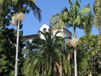 Tropical trees and bell tower.