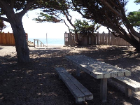 Picnic table in the shade of rugged cypress trees.
