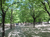 Wonderful shade under a canopy of trees.