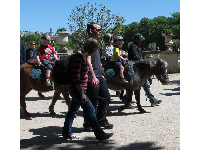 Pony rides in the park!
