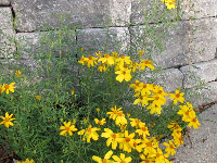 Yellow daisies and a wall.