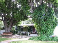 A house with morning glory vines in the front yard.