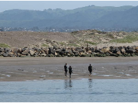 Surfers swim across the harbor, dodging boats and sea otters, to get to their favorite spot.