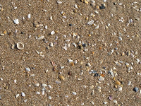 Shells in the sand at the shore. The sand is a great color!
