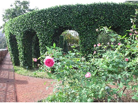 Hedge with archways.