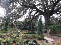 The garden and its incredible tree.