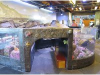Kids can climb through the tunnel under the tide pool tank.