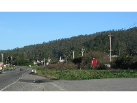 Deep blue-green forest, as seen from Highway 1, in Half Moon Bay.