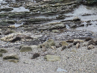 These seals are a pale brown, camouflaged against the sand.