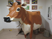 The cow outside the restrooms in the Museum of Ventura County, the best part of the museum!