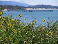 Looking toward Goleta Beach pier, on Lagoon Rd.