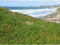 Carpet of green and purple stretching to the sea.
