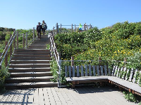 Stairs up to the Labyrinth Trail, with benches to rest.