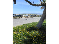 Flowers in the parking lot at Ventura Harbor Village, across the street from Harbor Cove Beach.