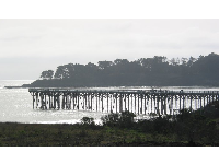 The forested peninsula and pier.