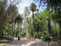 Tropical trees by the playground and picnic area.