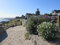 Flowers above the beach.