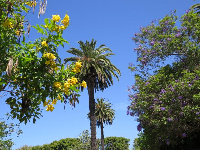 Palm trees, yellow flowering tree, and purple flowering tree.