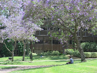 A student sits on the lawn.