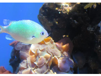 Cute fish and coral.