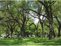 Picnic tables under twisty trees, on the far southeast end of the park, near Hibiscus Dr.