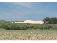 The dunes, seen as you drive along Oso Flaco Lake Rd.